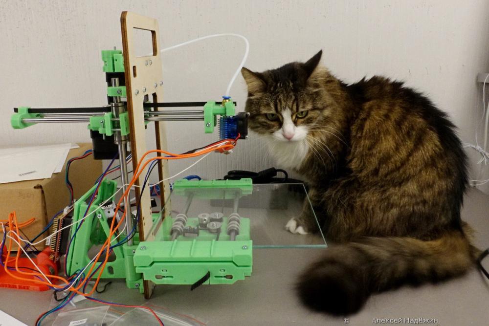 3D-принтер с открытым корпусом может травмировать вашего любимца